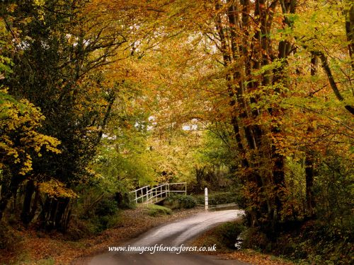 Autumnal Beauty of the New Forest