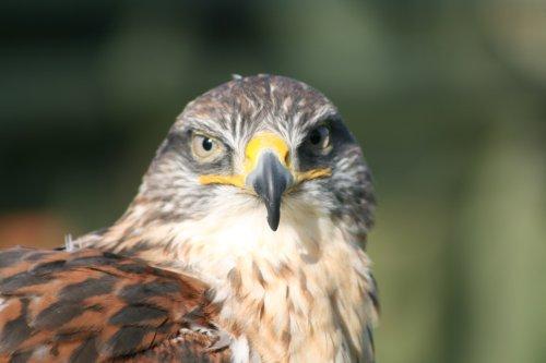 Devon Bird of Prey Centre