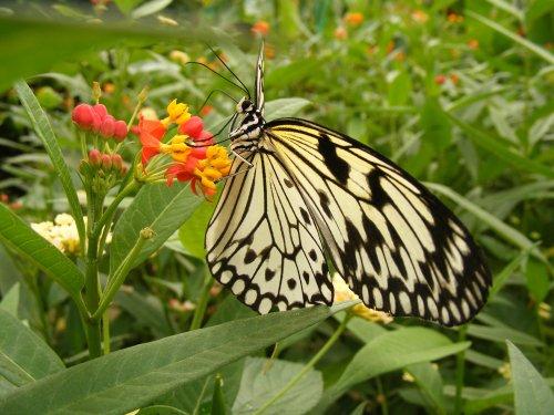 My Butterfly Princess