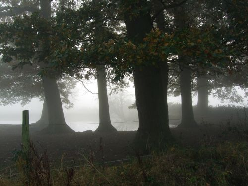 Misty day on the road to Marston