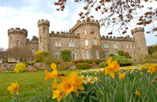 Daffodils and Castle Front