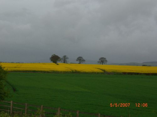 Fields in Scotland