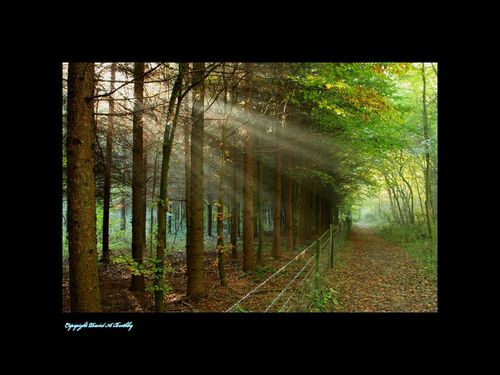Elloughton Woods