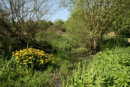 Loughton Linear Park in springtime