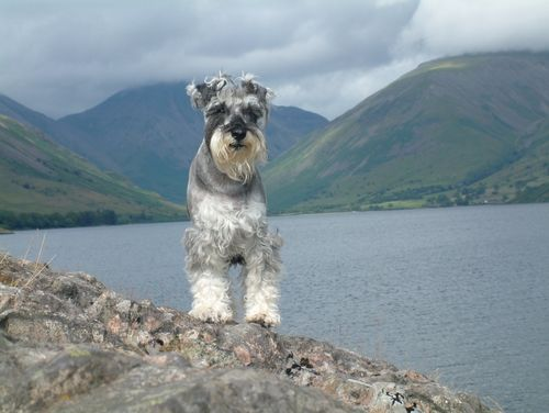 Dibble at Wastwater