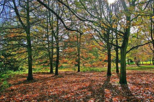 Autumn in Malvern Park