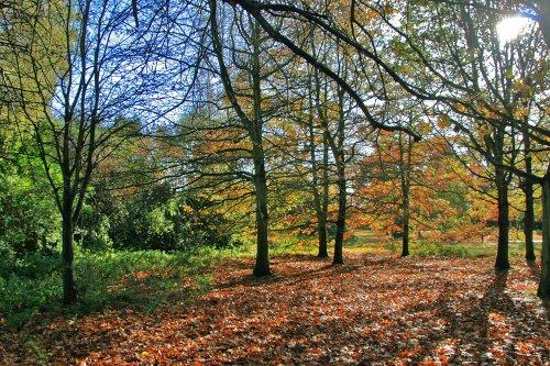Autumn in Malvern Park 2