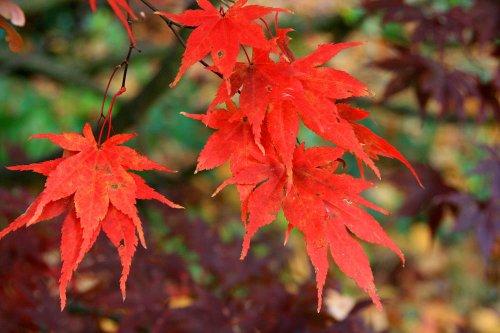 Autumn in Malvern Park 3