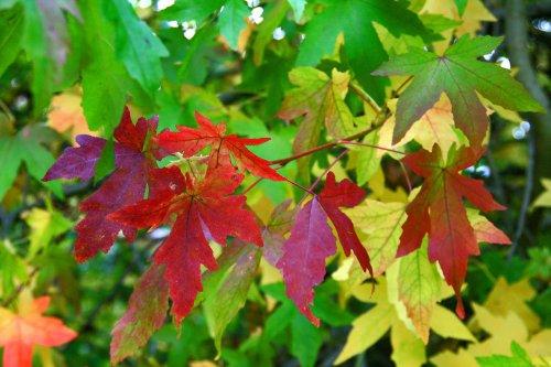 Autumn in Malvern Park 4