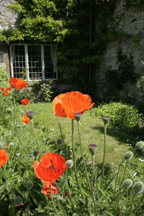 Cottage in village with poppies