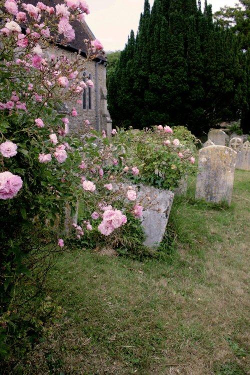 Roses in Churchyard