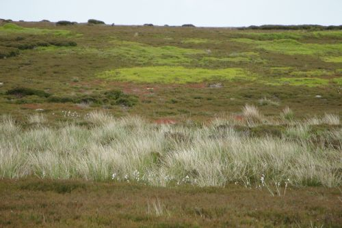 On the moors 6