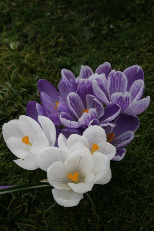 The colour purple..