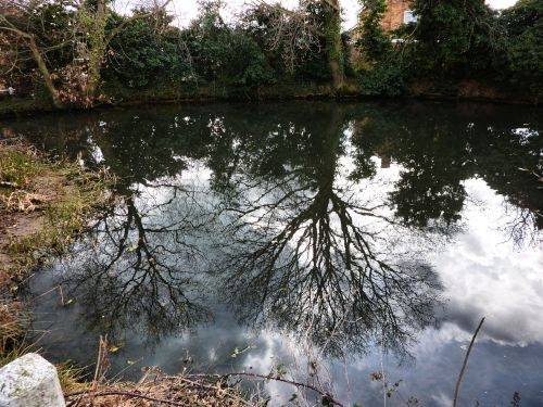 Blundeston pond reflections