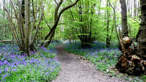 A walk in paradise [Norsey Woods ]  Billericay essex