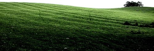 Ridge and Furrow remnants, Spring Hill, Grendon Underwood, Bucks