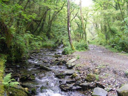 St.Nectan's Glen (Near Tintagel)