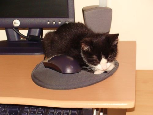 Cat and Mouse.
