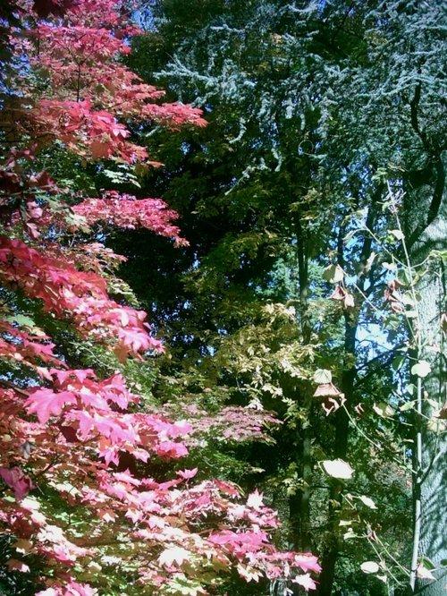Westonbirt Arboretum - October 2010