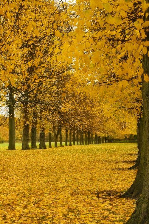 Avenue of Gold