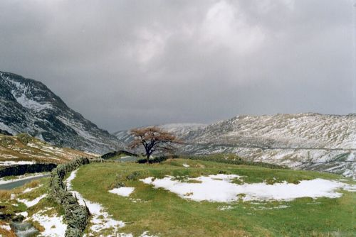 Lone tree, Kirkstone  Pass
