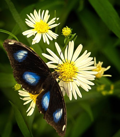 Ah Nectar!