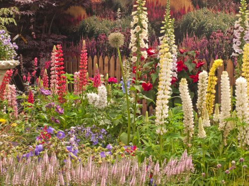 English Country Garden - Herbaceous border 1