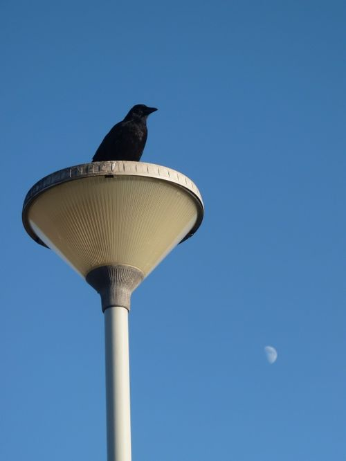 And The Crow Looked Over The Moon
