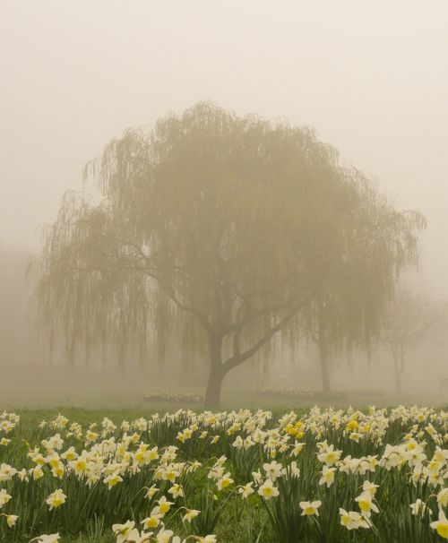 Misty March morning