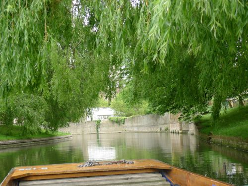 Underneath the Willow Trees, College Backs, Cambridge