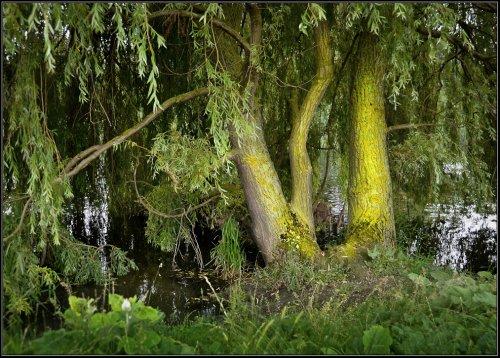 Lichen, Godmanchester.