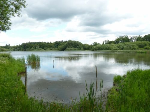 The Millpond - Warnham Nature Reserve