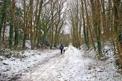 Stour Valley Winter, The North Dorset Trailway, Shillingstone.