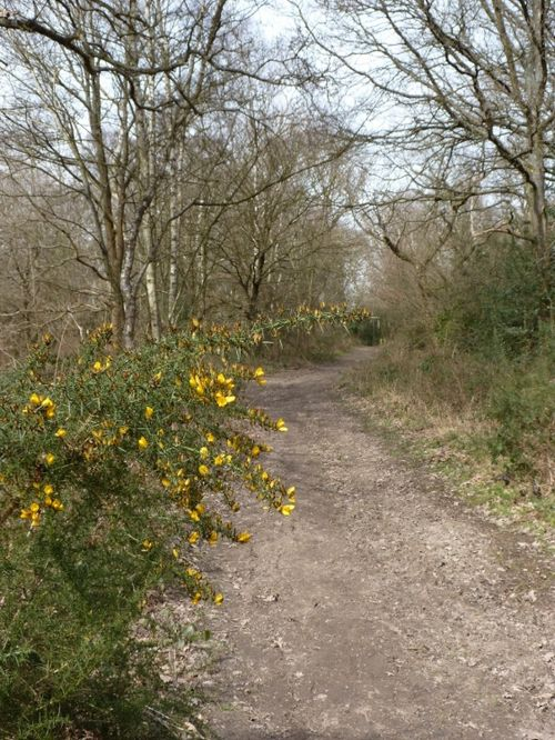 Gorse and all