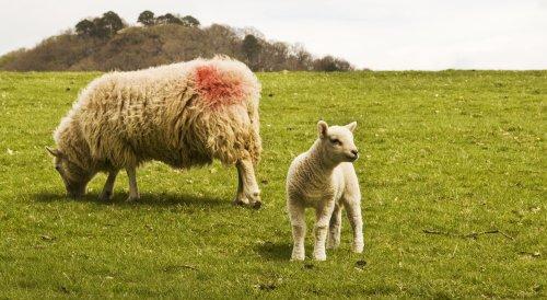 Derwentwater mother and child