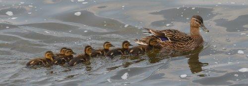 Following mum