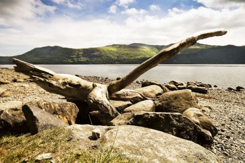 Derwentwater driftwood