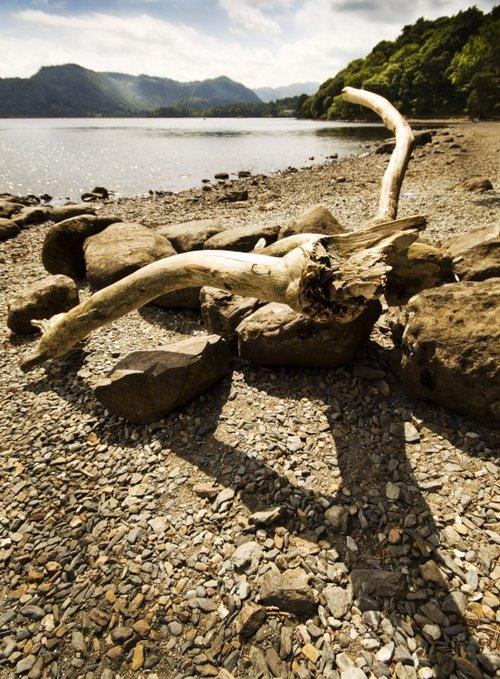 Derwentwater driftwood 2