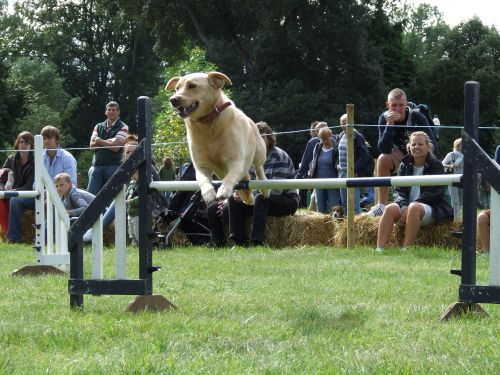 Frampton Country Fair