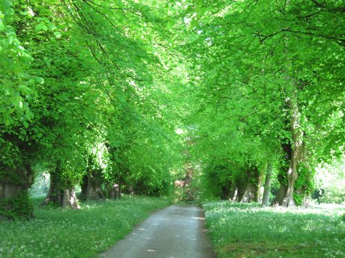 Woodland Walk, Constable Burton Hall Gardens at the entrance to Wensleydale
