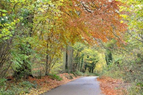 Everdon Stubbs in Autumn