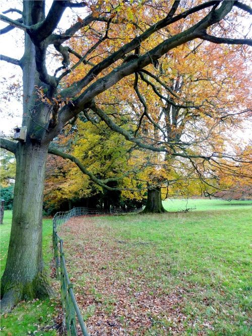 Nidd Parkland in Autumn.