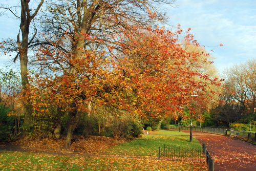 Colourful trees in Roker Park
