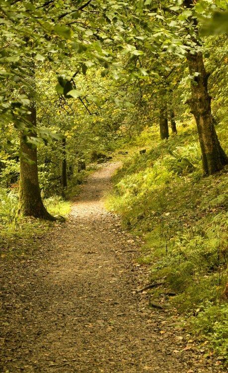 Rydal Wood footpath