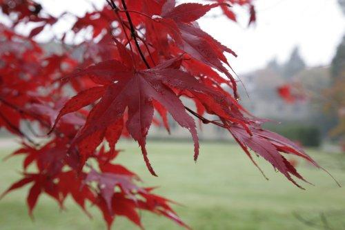Autumn at Wakehurst