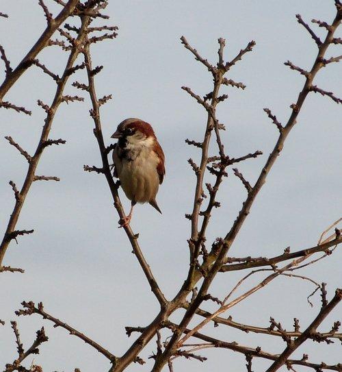 Taunton bird