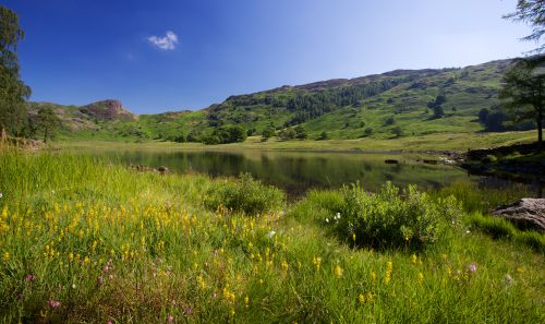Blea Tarn and Meadows