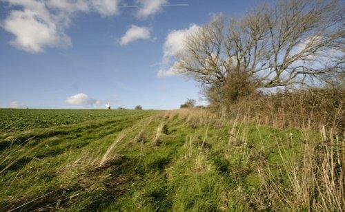 A Rural Walk