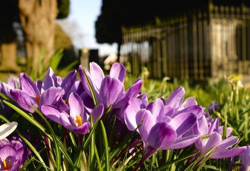 Spring Purples
