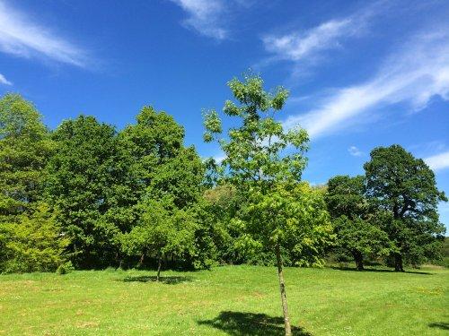 Malvern Park, Solihull